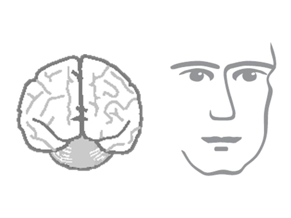Medical Advisor - das unsichtbare Gehirn und das menschliche Gesicht